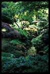 Visit the Japanese Garden Wallpaper Gallery