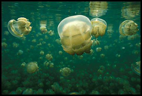Damn jellyfish!