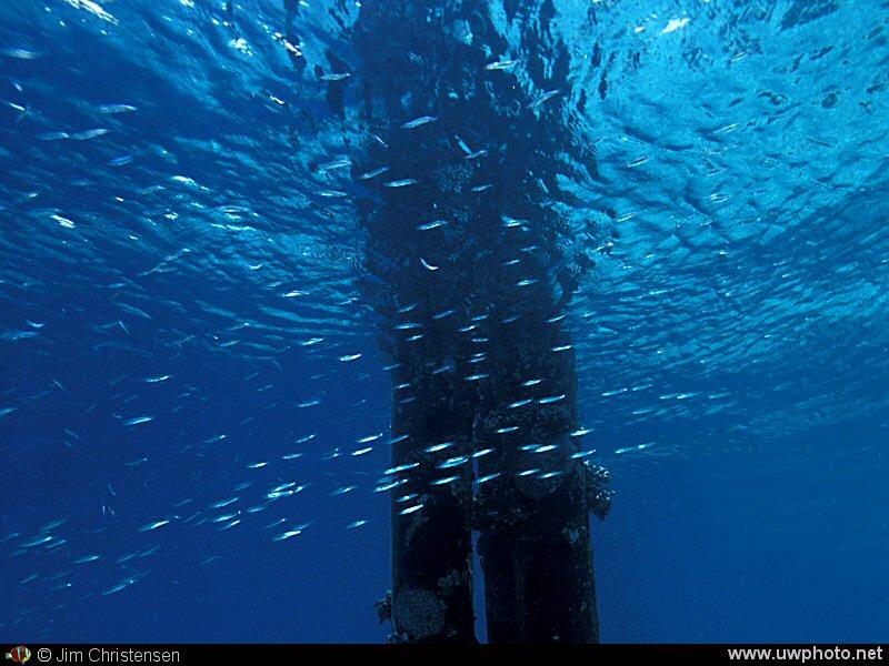Plenty Fish Dating - Plenty of Fish in The Sea - Home